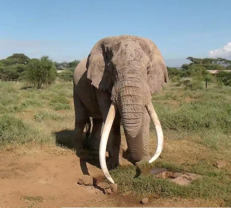 Slonzklami